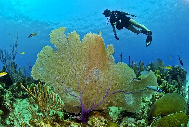Beim Schnorcheln und Tauchen die Unterwasserwelt in Bildern festhalten