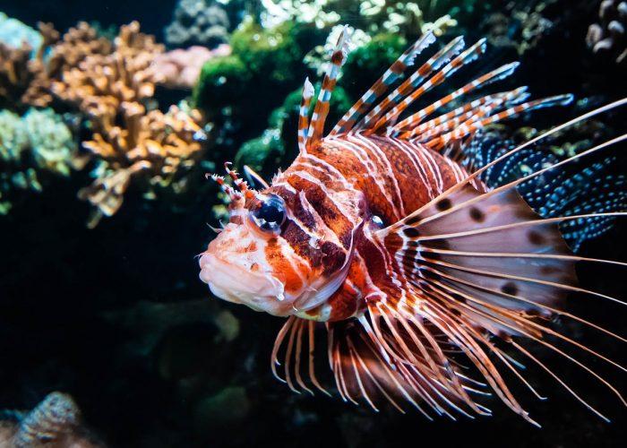Einzigartige Szenen festhalten mit der Unterwasser Drohne mit Kamera