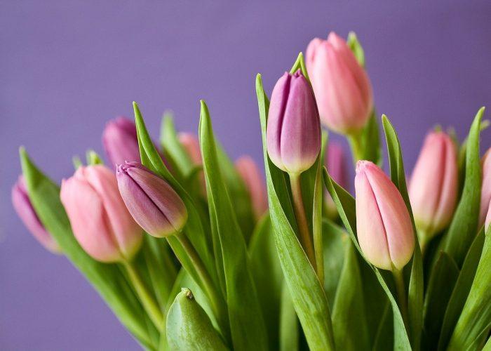 Blumen – ein zeitloser Klassiker zu jedem Anlass
